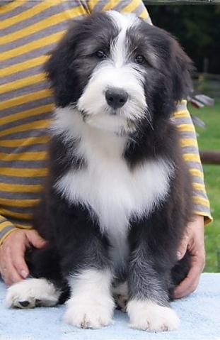 Puppies At 2 Weeks